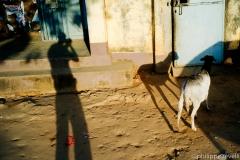 Guinee 2011