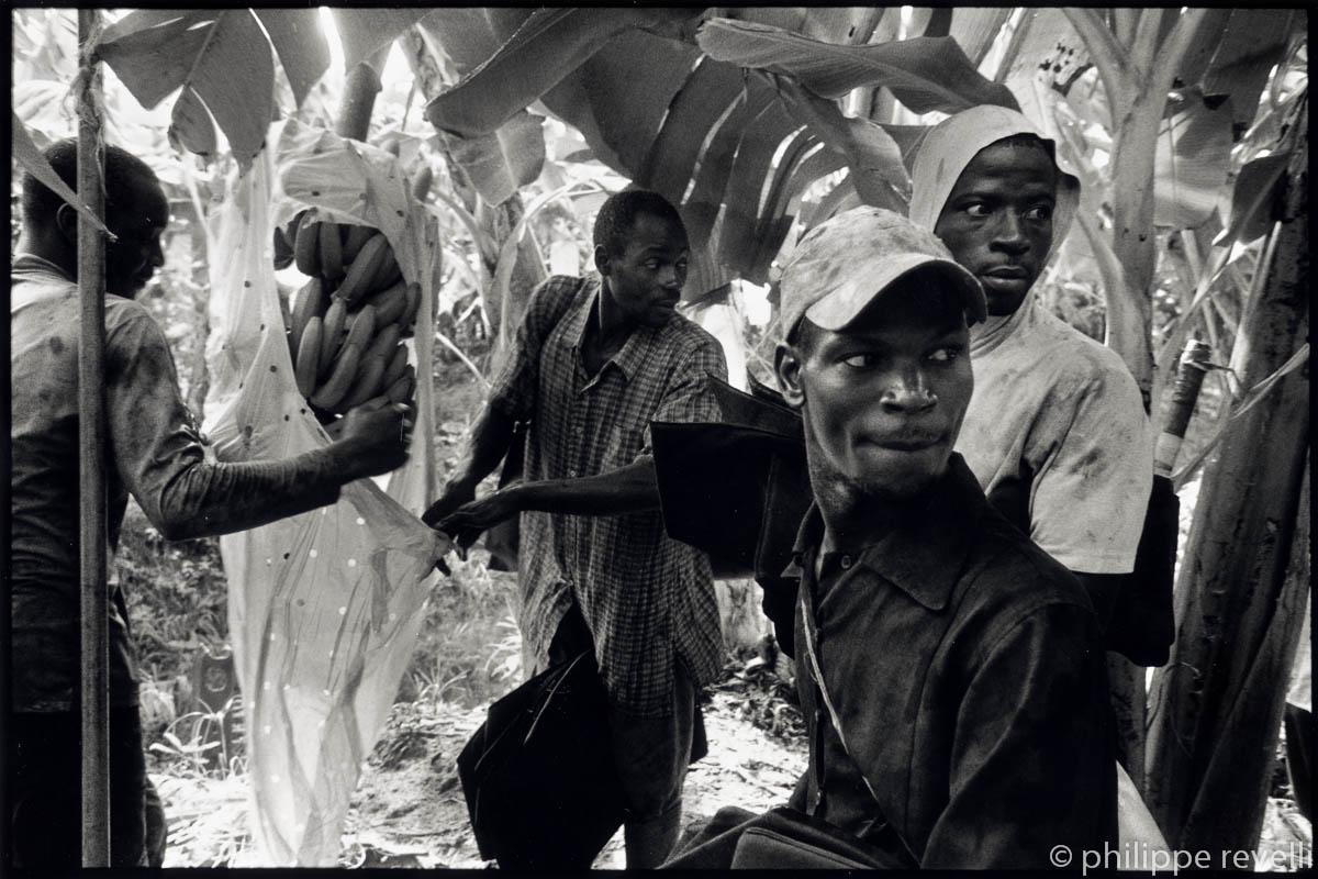 Cameroun 2006